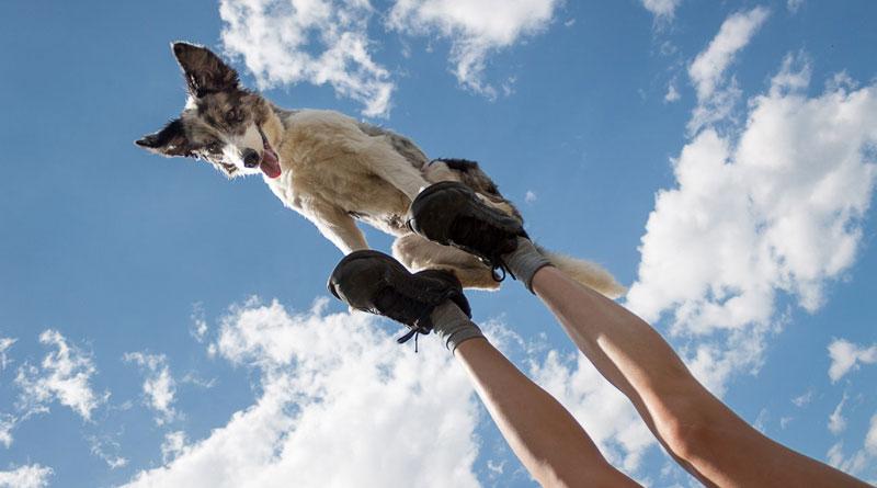 как научить собаку делать стойку на ногах