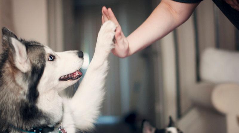 как научить собаку давать пять