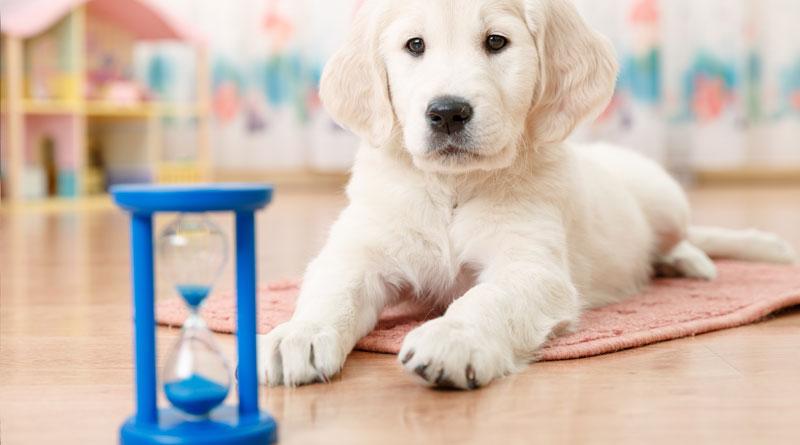 как научить собаку команде место