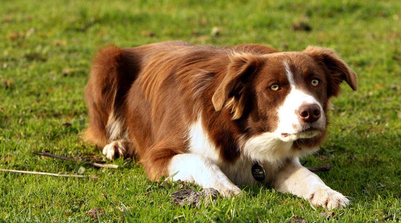 как научить собаку ползти