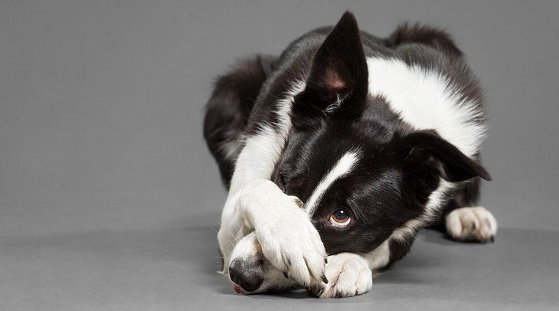 как научить собаку команде стыдно