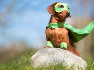 необычные трюки для собак