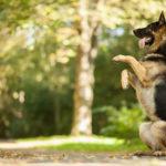 как научить собаку команде служить, зайка