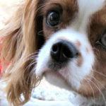 40 трюков для собак