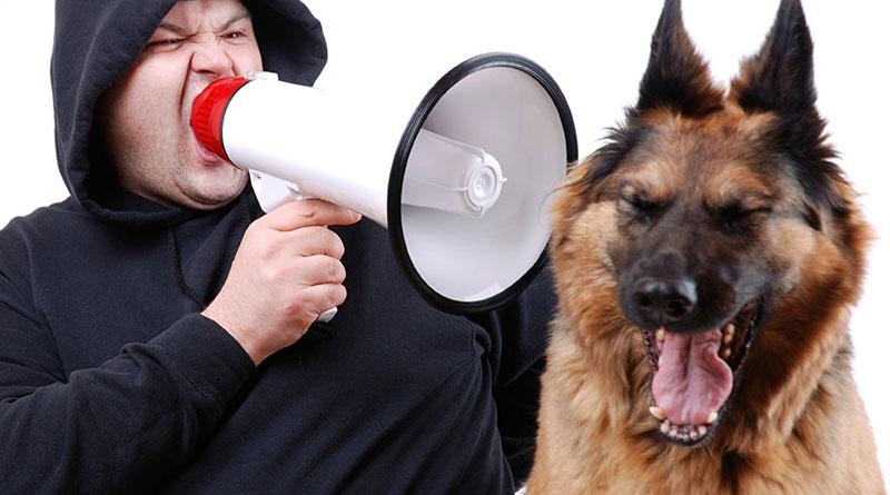 не кричите на собаку