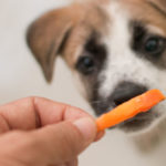 чем поощрять собаку при дрессировке