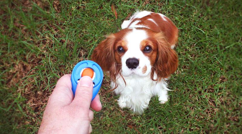 кликер-дрессировка собак