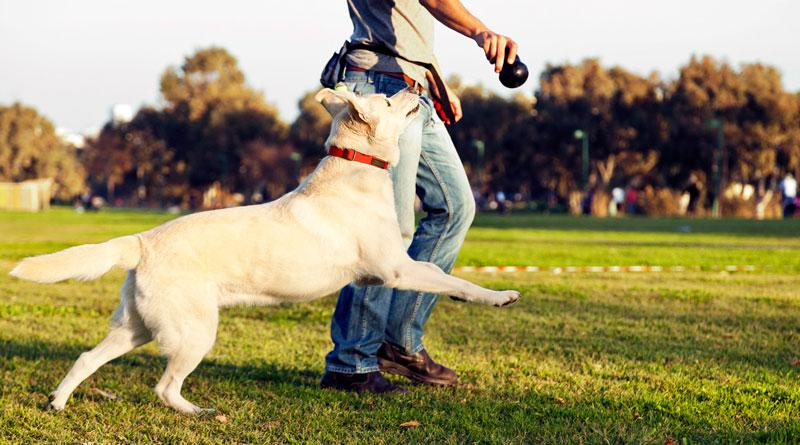 игры с собакой дома и на улице