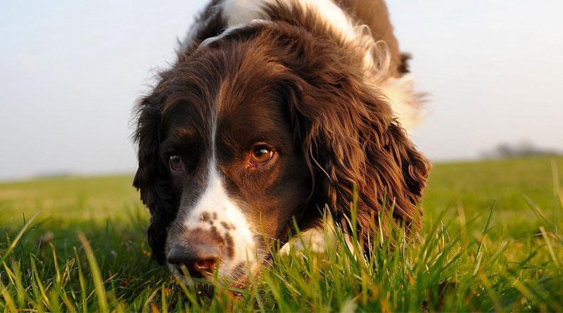 как научить собаку искать по запаху