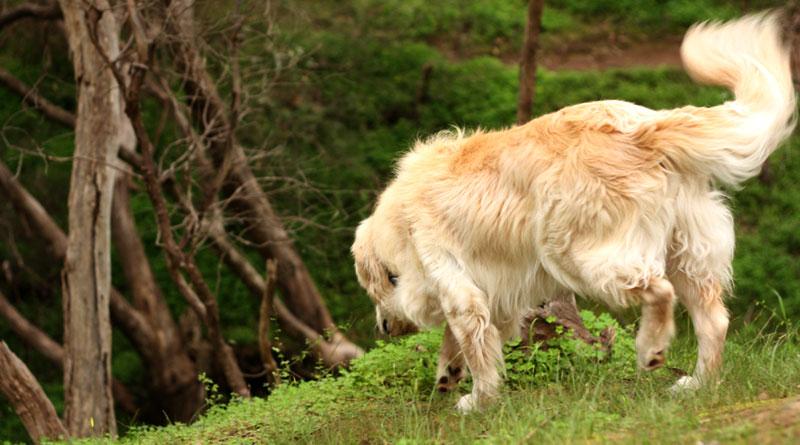как научить собаку искать предметы, команда ищи