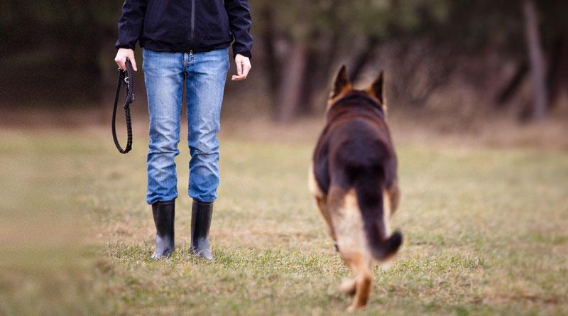 Картинки по запросу Начальная дрессировка щенка: команды «стоять», «ждать», «место»