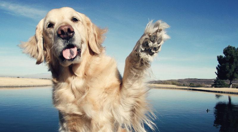 как научить собаку махать лапой на прощание
