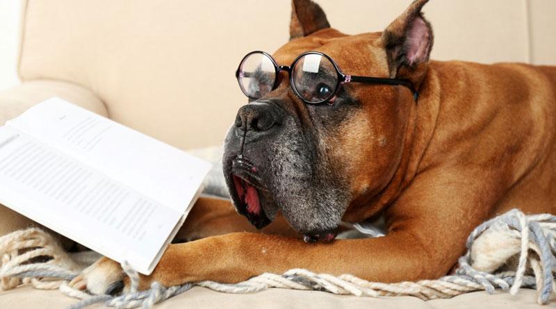 команды для собак на немецком и английском