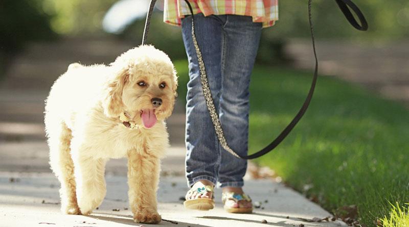 куда пойти с собакой в москве