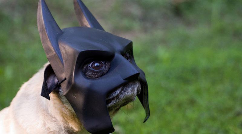 мопс бэтмен