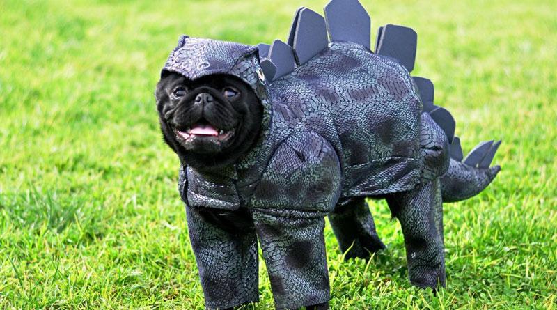 мопс динозавр