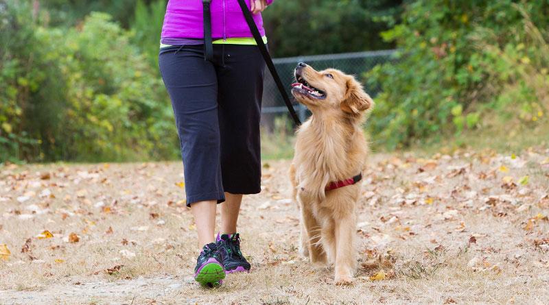 как научить собаку ходить рядом на поводке