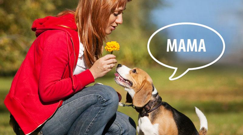 как научить собаку говорить слова мама