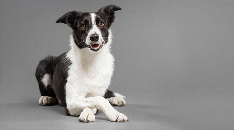 научить собаку класть одну лапу на другую