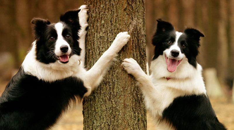научить собаку трюку прятки