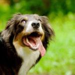 как научить собаку внимательности