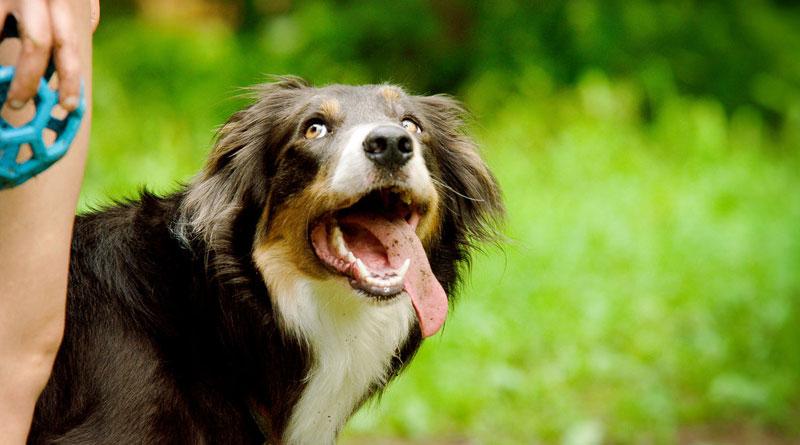 как давать собаке таблетки от глистов мильбемакс