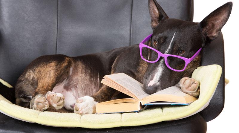 смешные собачьи законы