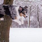 паркур собака