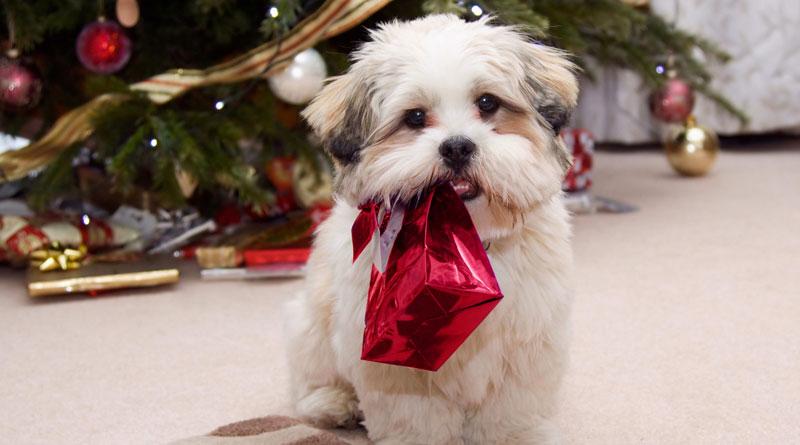 подарки собаке