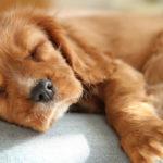 сон собака