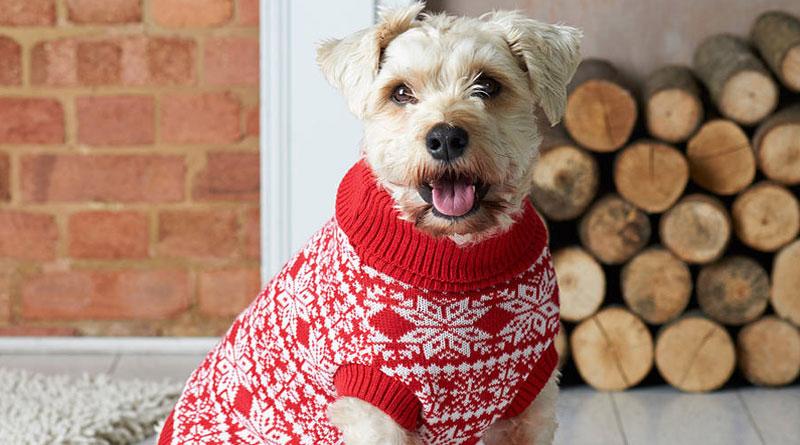 собака в новогоднем свитере