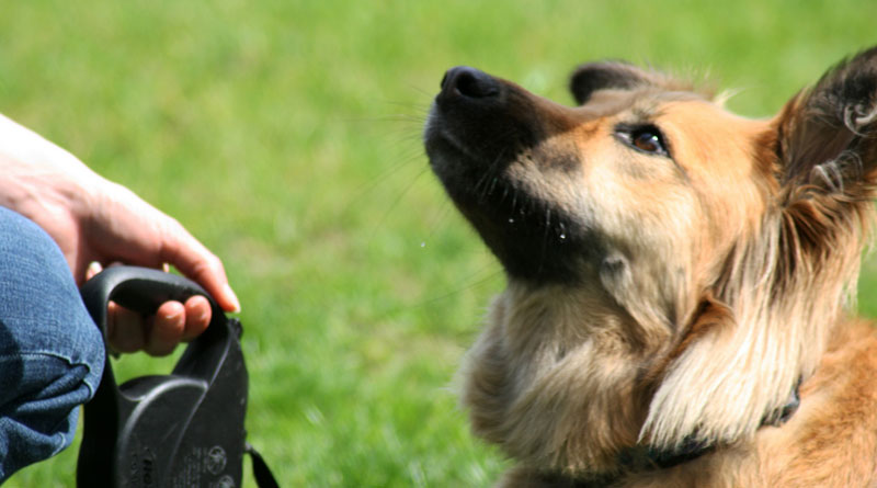 работа над концентрацией у собак