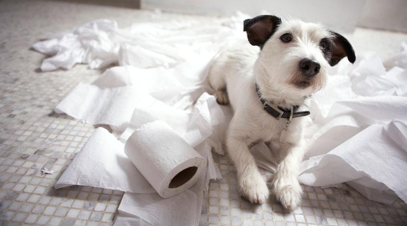 собака нагадила дома