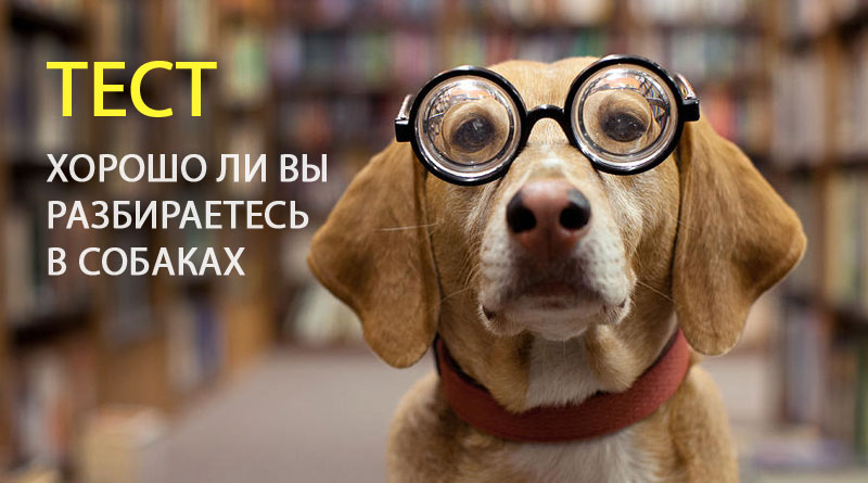 хорошо ли вы разбираетесь в собаках, тест