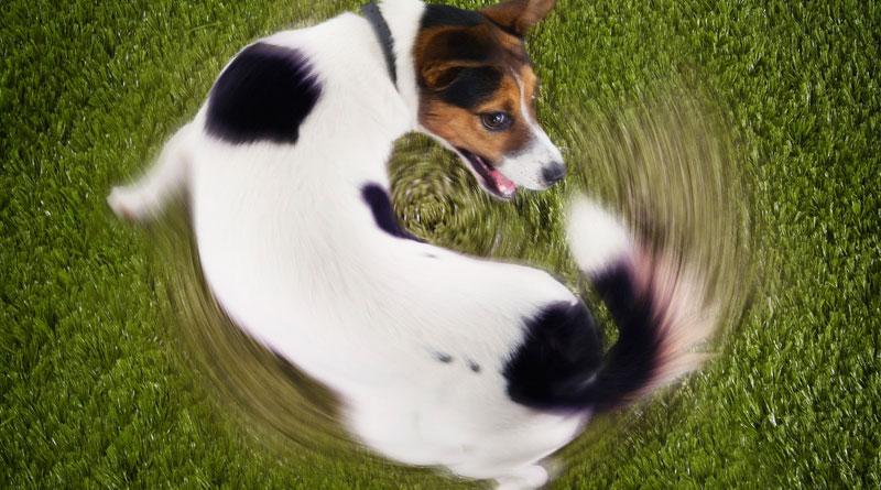 как научить собаку команде вертись