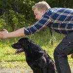 научить собаку двигаться вперед
