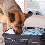 как научить собаку искать предметы по запаху