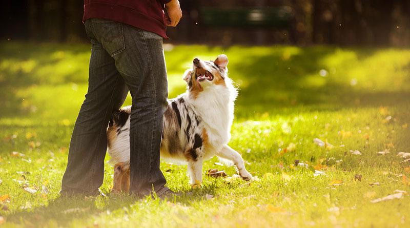 как научить собаку команде змейка