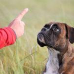 как научить собаку ждать