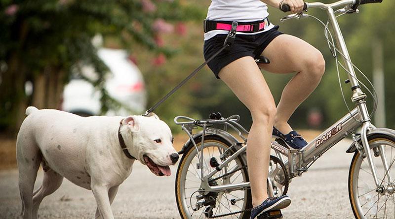 Как приучить собаку к прогулам на велосипеде