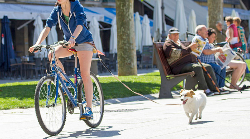 how to ride a bike with a dog