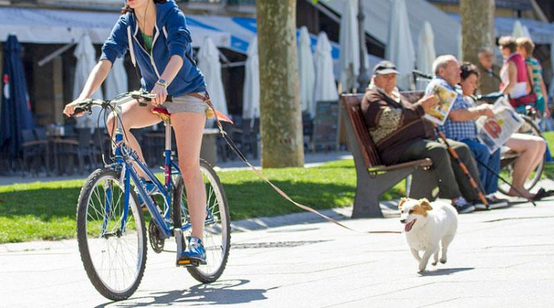 как кататься на велосипеде с собакой