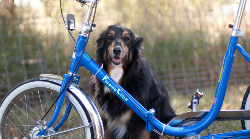 walking the dog on a bike