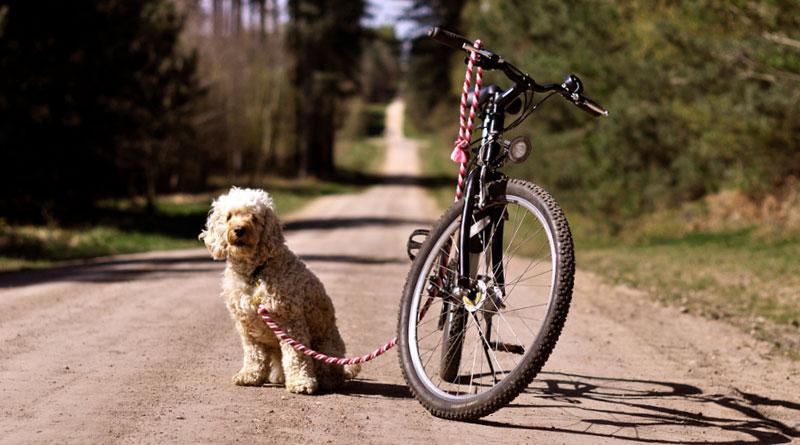 как приучить собаку к велосипеду