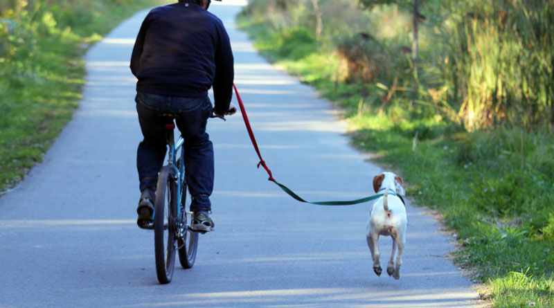 how to teach a dog to run next to a bike