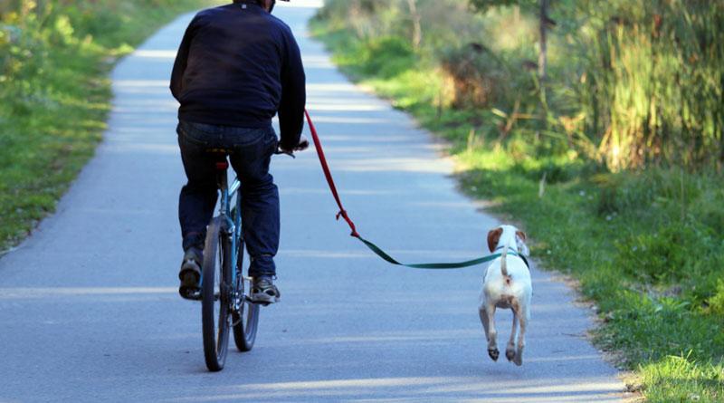 как научить собаку бежать рядом с велосипедом