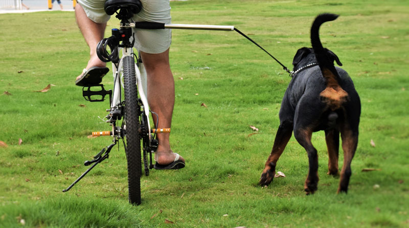 attaching the dog to the bike