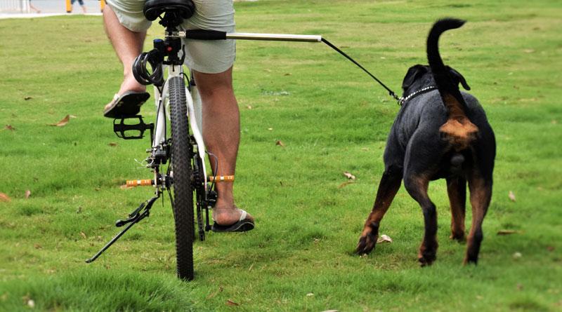 крепление собаки к велосипеду