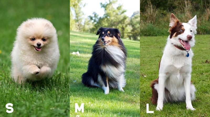 классы аджилити и породы собак