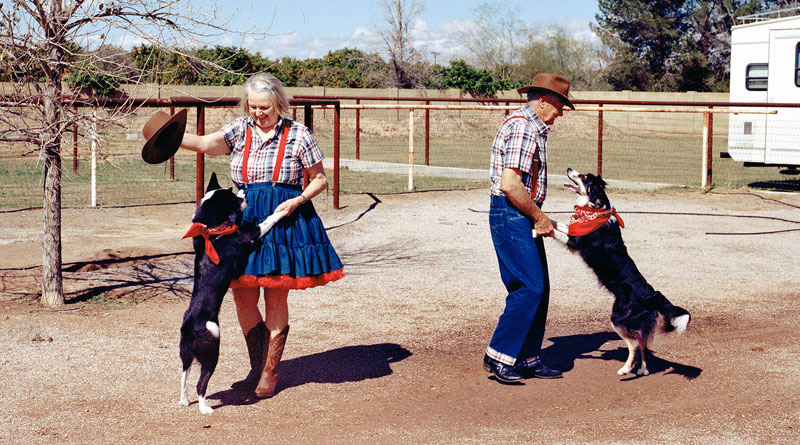 фристайл с собакой